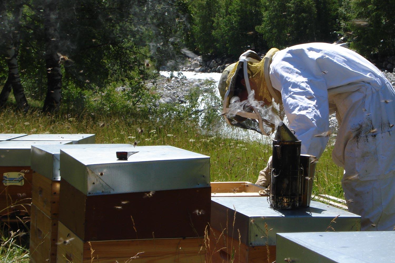 un ecrin de miel apiculteur la route des savoir faire de l 39 oisans. Black Bedroom Furniture Sets. Home Design Ideas