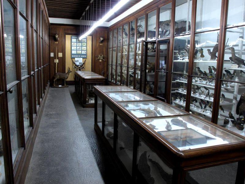 Museum d'Histoire Naturelle de Chambéry