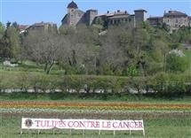http://Tulipes%20contre%20le%20cancer