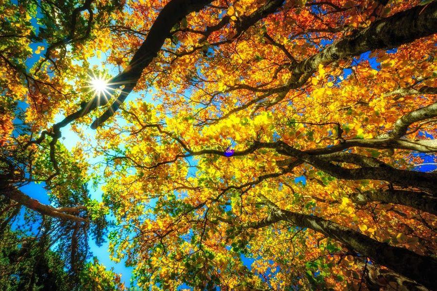 Retrouvance Buëch Dévoluy - Séjour Photos randonnée Automne : dansla féerie des couleurs de l'automne - � Nicolas Fragiocomo