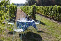 Au milieu des Vignes © De Jonghe Ⓒ Au milieu des Vignes  De Jonghe