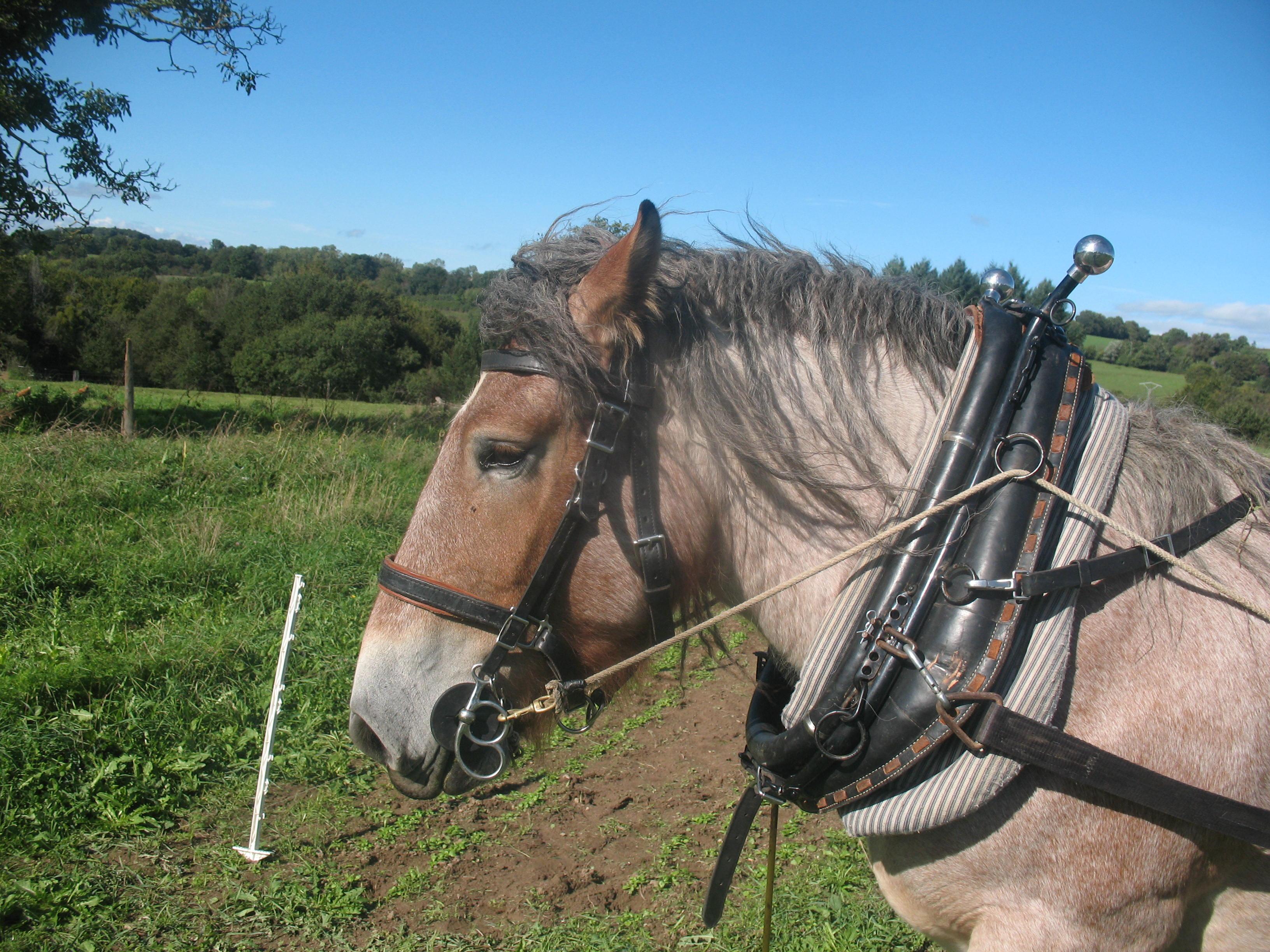 Découverte du cheval de trait au travail - Le Mayet-de-Montagne Jardin et chevaux/initiation à la traction animale Ⓒ Jardins et Chevaux-E. PONSIGNON 2015