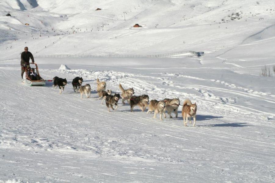 Balades en traineaux chiens en hiver maurienne tourisme for Balade chien de traineau doubs