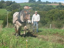 Découverte du cheval de trait au travail - Le Mayet-de-Montagne Astuce et Emmanuel Ⓒ Jardins et Chevaux-E. PONSIGNON 2015