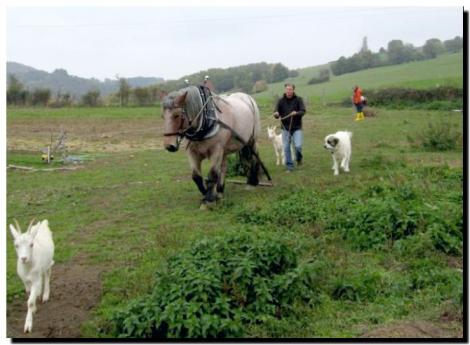Découverte du cheval de trait au travail - Le Mayet-de-Montagne un participant aux guides d'Ursina Ⓒ Jardins et Chevaux-E. PONSIGNON 2015