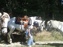 Country Pony Ranch Balade Ⓒ Country Pony Ranch - 2014