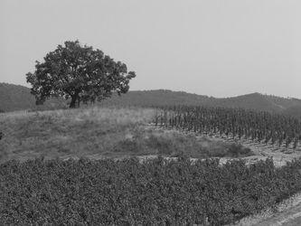 vins - vigneaux - valvigneres