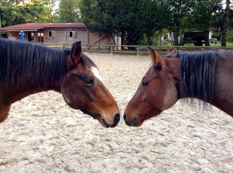 Mareuil équitation