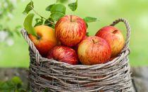 Foire aux pommes - Terroir en fête - Pailharès