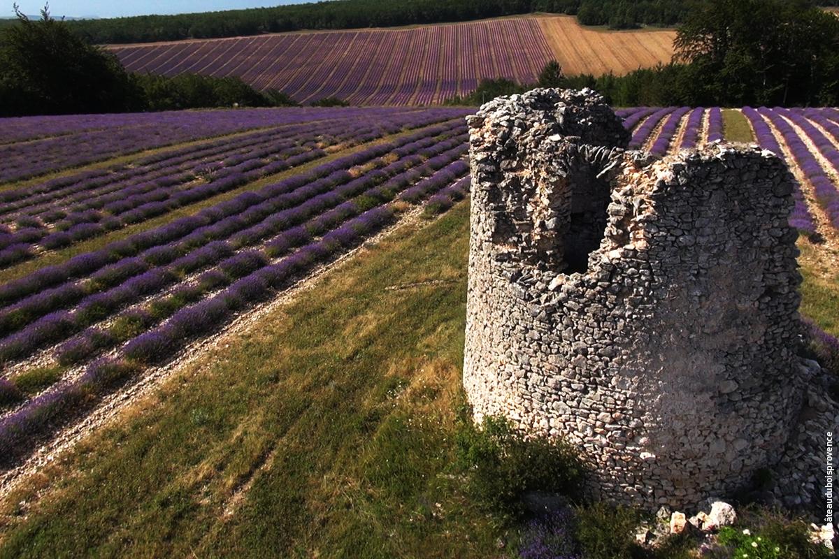 Château du Bois - Pure Lavande