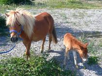 Poneys Alba équitation