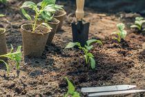 Vente de Fleurs et de Plants de Légumes - Colombier-le-Vieux