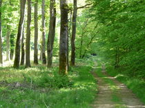 Photo forêt de Marcenat 1 Forêt de Marcenat 1 Ⓒ Smat du Bassin de Sioule