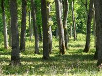 Photo forêt de Marcenat 2 Forêt de Marcenat 2 Ⓒ Smat du Bassin de Sioule