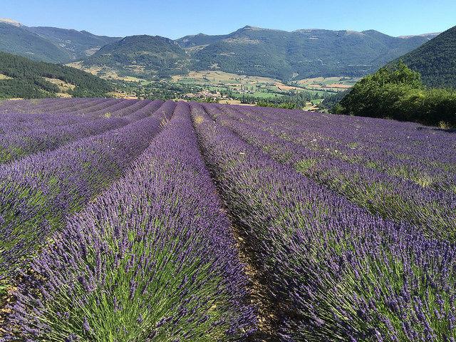 Serre des Ormes - © www.serredesormes.co.uk