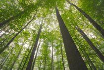 Forêt de Tronçais Ⓒ Luc Olivier / CDT 03