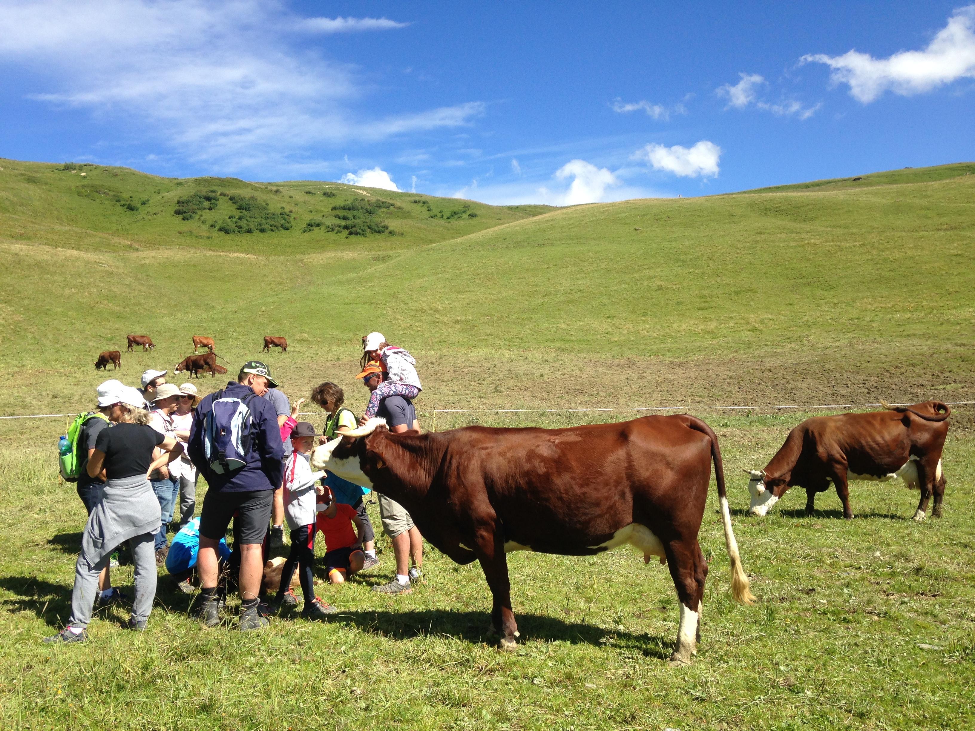 A la rencontre d'un alpagiste sur les pentes du col du Joly : Visite guidée