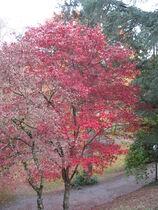 arbre Ⓒ office de tourisme de Néris-les-Bains