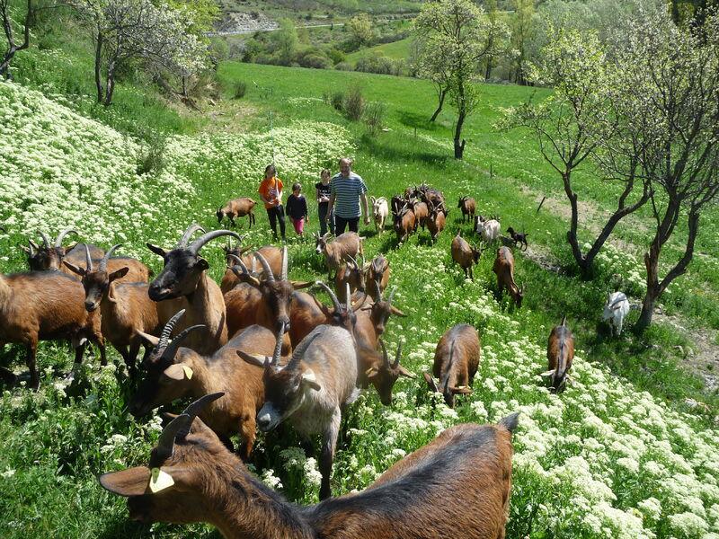 Visite de la ferme découverte Les Jassines - � Gaec Les Jassines
