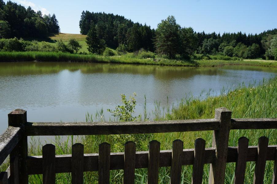 Balade le marais des l ches site officiel de l 39 office de tourisme haut bugey nantua - Office de tourisme nantua ...