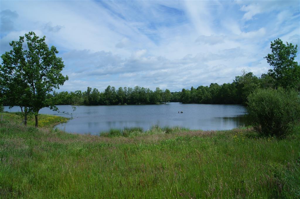 ENS de la Vauvre - Nassigny Plan d'eau Ⓒ Réserve Naturelle