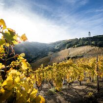 Marché aux vins - Cornas
