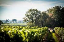 Vignoble de St-Pourçain Ⓒ DEJONGHE