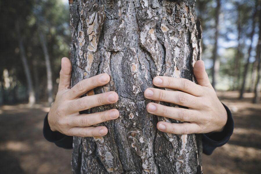 http://Comme%20l'arbre%20dans%20%20la%20ville,%20respirez%20l'histoire%20!