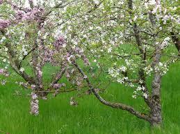 Université Populaire Centre Ardèche : Atelier La greffe des arbres fruitiers