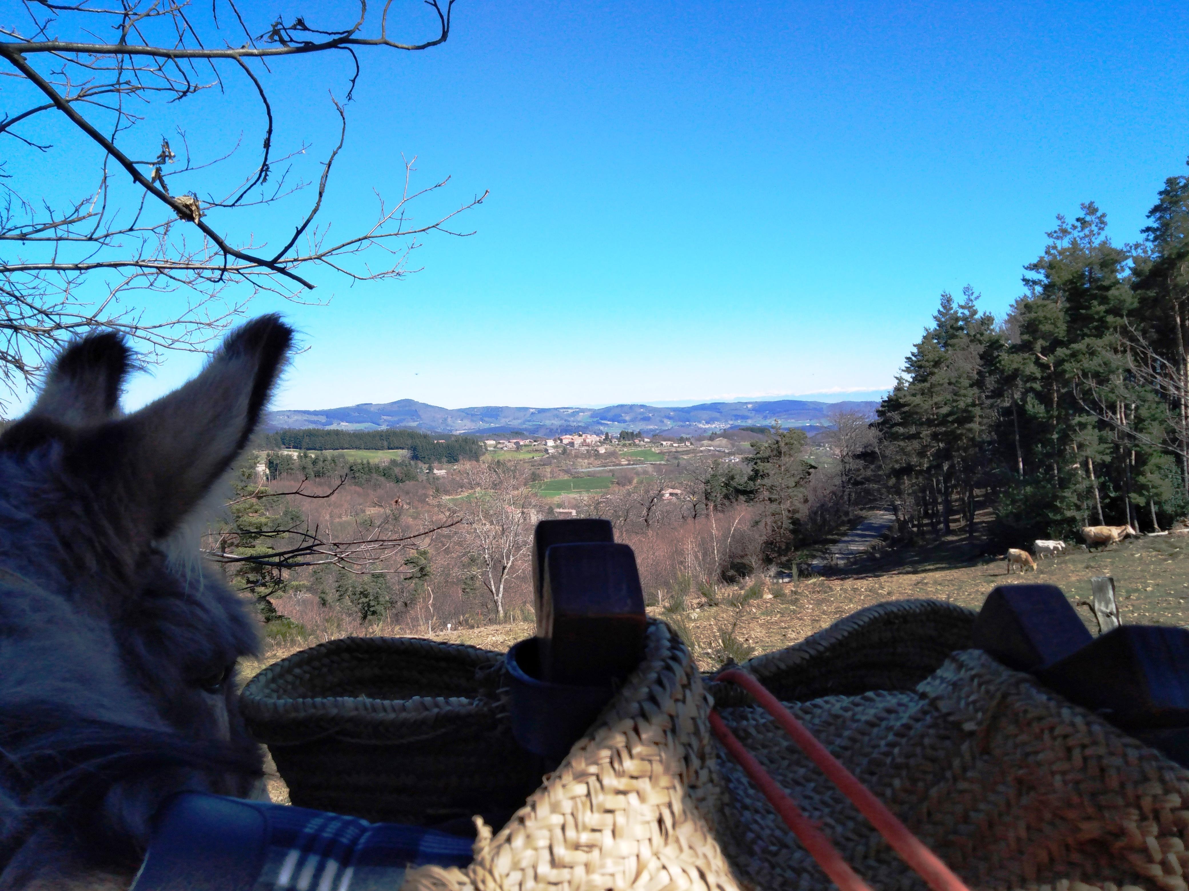 Activités sportives : Ânes sans frontières - randonnées avec des ânes