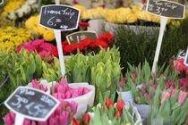 Marché aux fleurs - Arlebosc