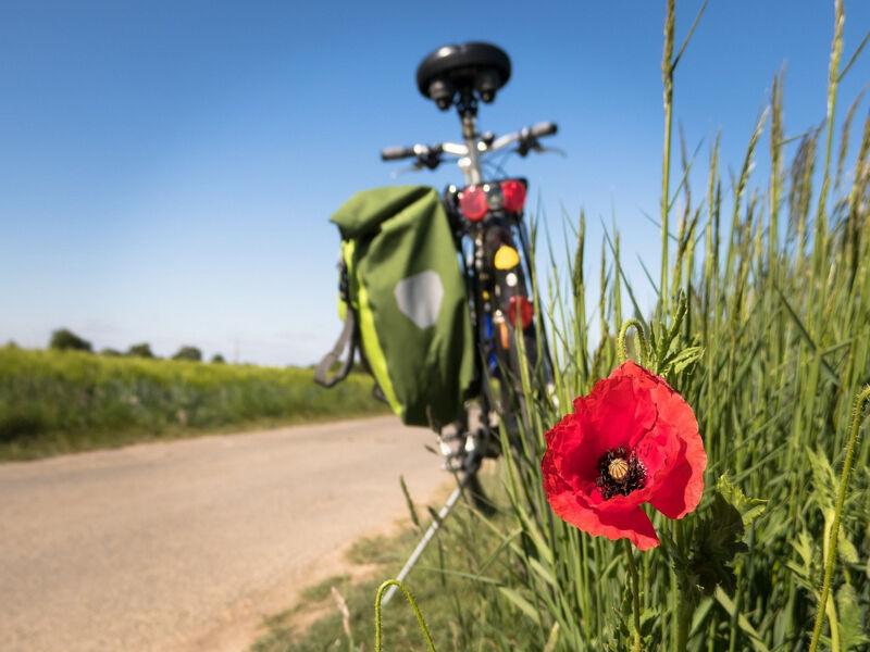 Vélo Camargue
