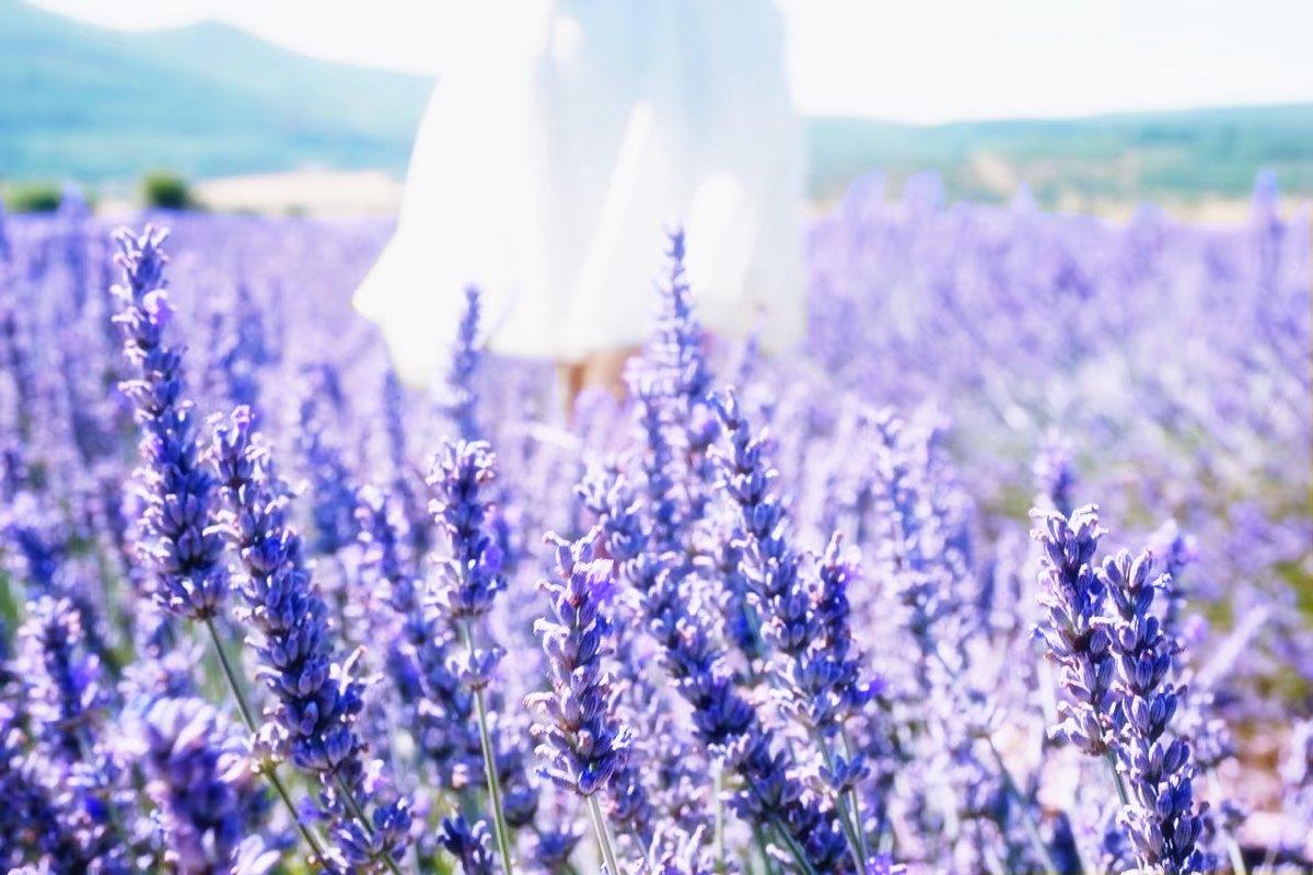 MD Provence Jardin
