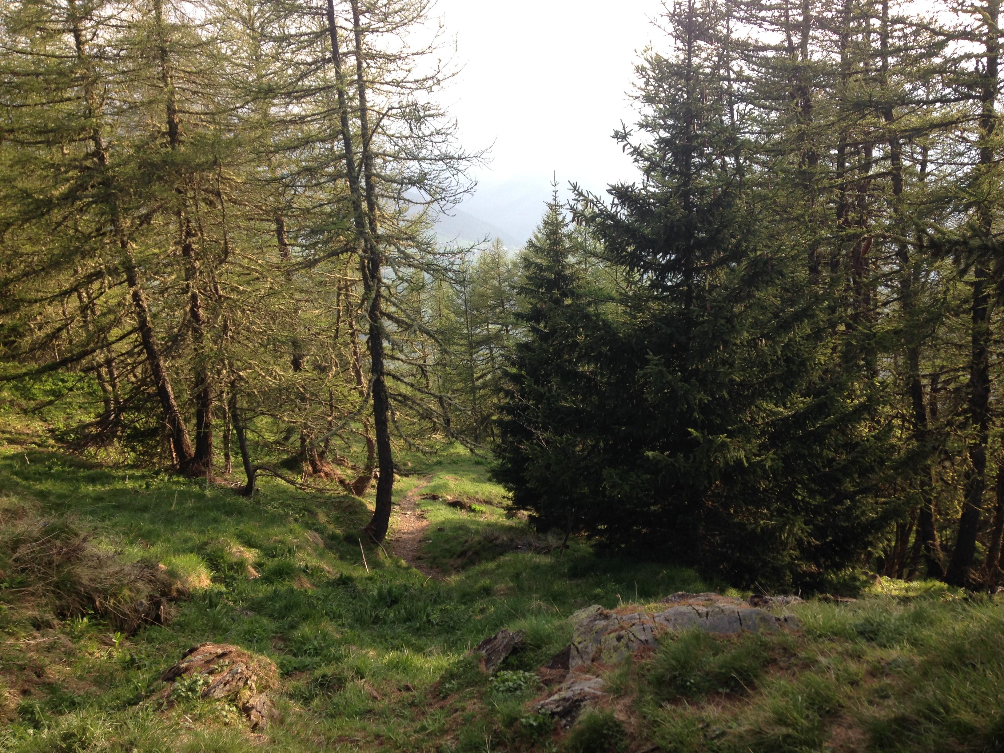 Sentier de la Croix de Mont Tissot