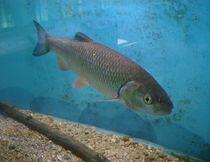 Maison Aquarium - Jaligny Chevesne Ⓒ Maison Aquarium