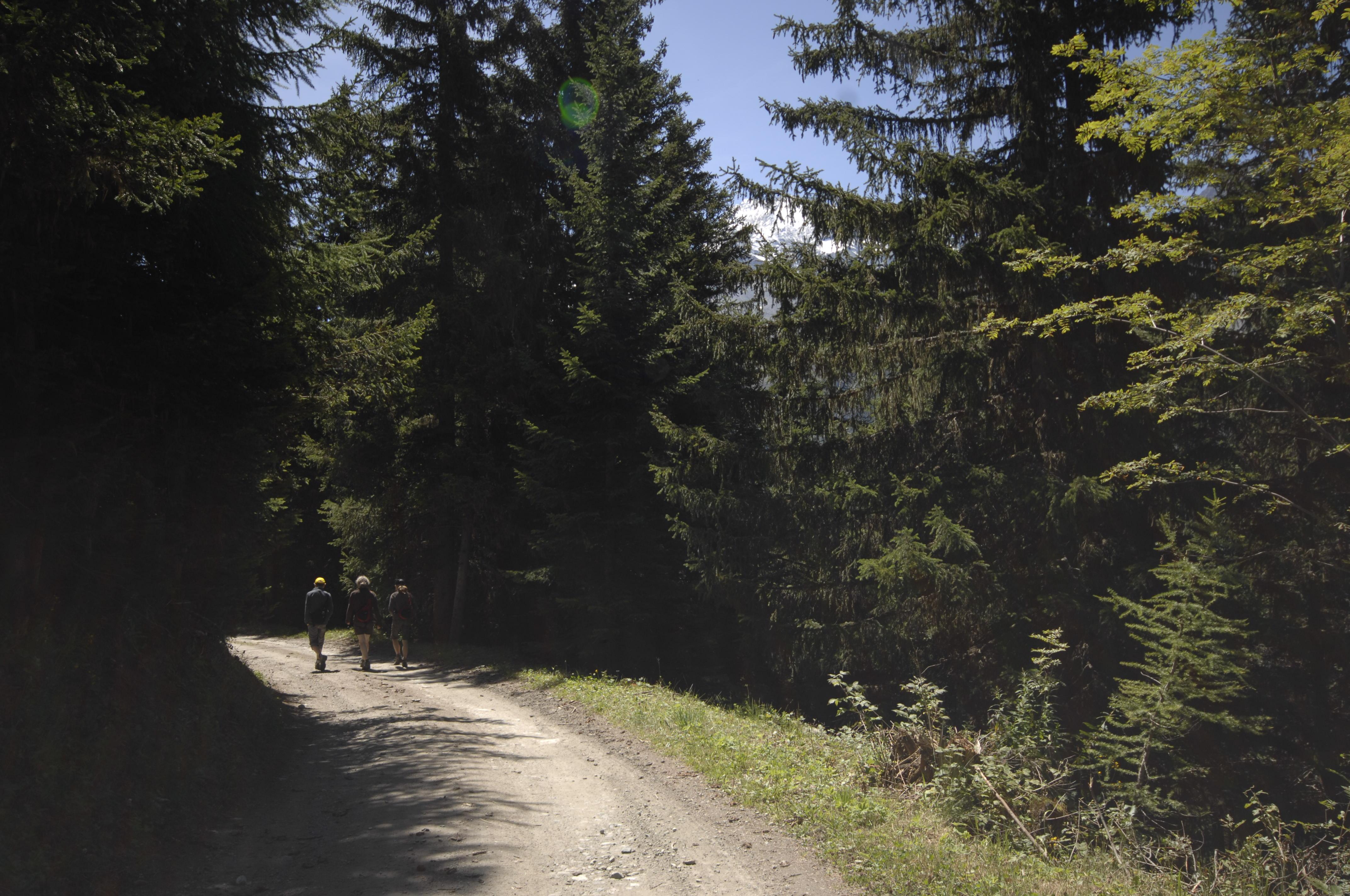 Chemin en forêt Plan Bois