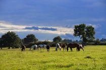 Domaine équestre d'Écyla - Chazemais Prairie de 40 hectares Ⓒ Écyla