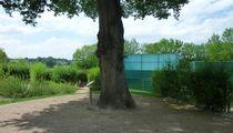 Maison Aquarium - Jaligny Le chêne qui parle aux visiteurs dans le jardin de nature Ⓒ Maison Aquarium