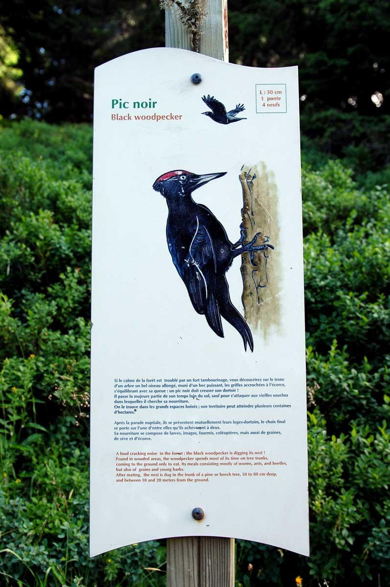Sentier des oiseaux Châtel