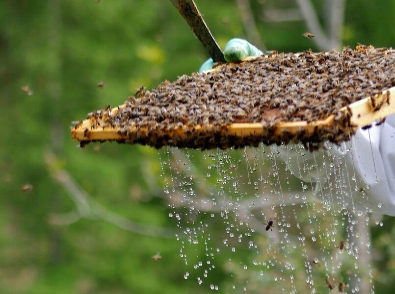 Nectar de la journée - © L.Marchand
