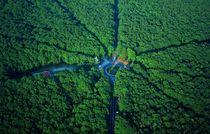 Balade en forêt de Tronçais Vue aérienne de la Forêt de Tronçais Ⓒ Franck Lechenet