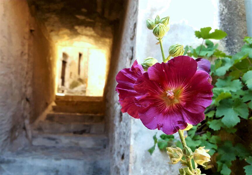 Visite guidée du village médiéval d'Orpierre - © Office de Tourisme Sisteron Buëch