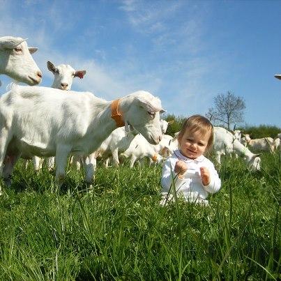 Ferme de Villars Élevage de chèvres Ⓒ Ferme de Villars