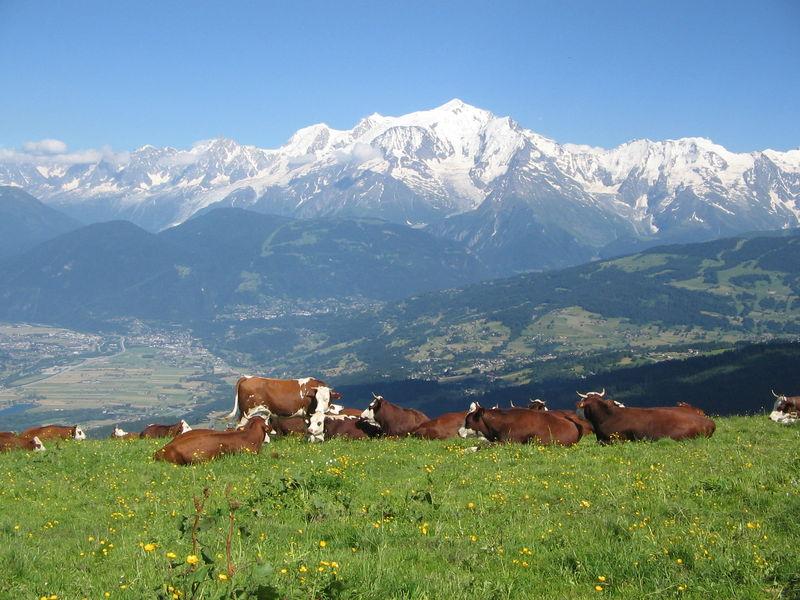 Vue sur le Mont-Blanc depuis les Bénés - Cordon