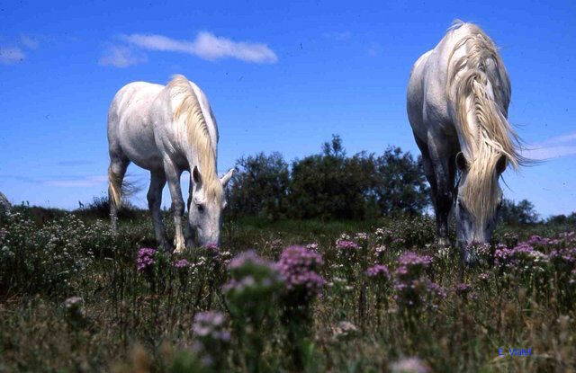 Promenade à cheval au Domaine de la Palissade