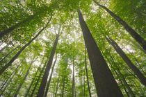 Balade en forêt de Tronçais Arbres Ⓒ Luc Olivier