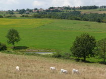 Photo paysage Saint-Priest-d'Andelot Saint-Priest-d'Andelot, Paysage Ⓒ Smat du Bassin de Sioule