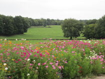 earl domaine des roses Ⓒ earl domaine des roses