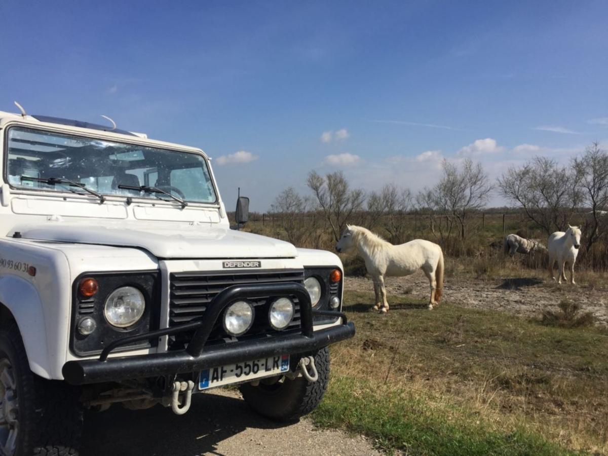 Camargue Alpille Safari