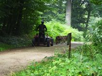 Itinérance Mushing Cani kart en forêt Ⓒ C. Basseville - 2013